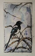 Magpie in the Branches